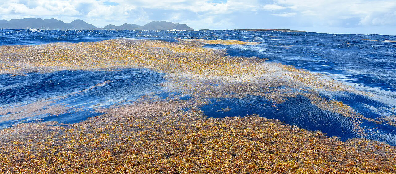 toxic seaweed: sargassum gas detectors on the carribean & west indies beaches