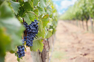 CO2 hazards in wineries and breweries